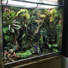 Geckos, Snake Cages, Gecko Terrarium, Aquarium Landscape, Reptile Room, Crested Gecko, Aquarium Design, Animal Room, Reptiles And Amphibians