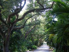Coconut Grove streets- Miami