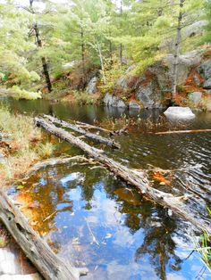 Six Mile Lake Provincial Park Ontario Canada - Autumn Ontario Camping, The Good Place, Wanderlust, Canada, Autumn, Park, World, Places, Travel