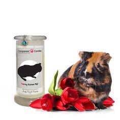 I Love My Guinea Pig! - Companion Candles