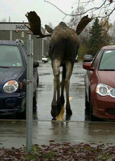 Parcheggio riservato a babbo natale