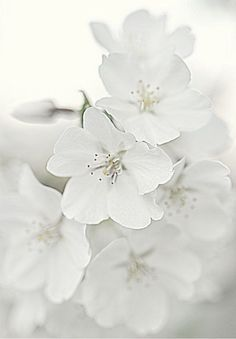 white blossoms ❊**Have a Good Day**❊ ~ ❤✿❤ ♫ ♥ X ღɱɧღ ❤ ~ Sat 3rd Jan 2015