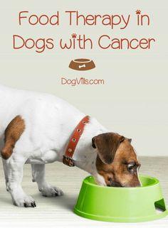 7 Best Dog Cancer Diet Images On Pinterest In 2018 Dog Cancer Diet