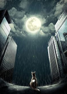 Digital art selected for the Daily Inspiration #1147 - #cat #moon