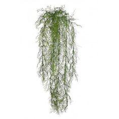 Planta colgante de esparraguera. Bonita planta colgante artificial esparraguera de gran calidad y belleza. Tiene un tamaño de 82cm de largo y 25cm de ancho. Sin maceta. Dandelion, Herbs, Flowers, Plants, Hanging Plants, Fake Flowers, Elegance Fashion, Pretty, Beauty