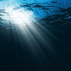 the deep of the ocean - Google Search