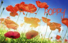 """28 Flower-Inspired Baby Names That Aren't """"Rose"""" - Julie Blythe - 28 Flower-Inspired Baby Names That Aren't """"Rose"""" Poppy Bohemian Baby Names, Nature Names, Growing Plants, Poppies, Backyard, Rose, Garden, Pretty, Flowers"""