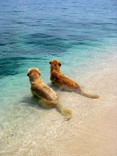 2 dogs sitting in the water.