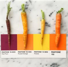 Image result for carrot pantone