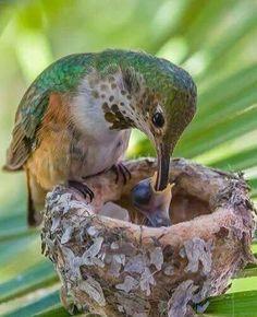 Pássaros de Deus!!!