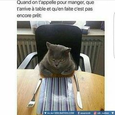 20 funny animal memes that make you roar with laughter - .- 20 lustige Tier-Memes, die dich vor Lachen brüllen lassen – 20 funny animal memes that make you roar with laughter – # roar # - Funny Animal Memes, Funny Animal Pictures, Cat Memes, Funny Animals, Funny Images, Funny Photos, Hilarious Pictures, Funny Humor, Funny Life Memes