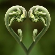 heart shapes in nature - Google Search art for inspiration Pinter