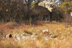 Mi Casita en el Bosque: Last Days of Winter ♥ It's time to celebrate ♥ Winter Prairie Picnic