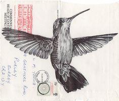 Bic Biro on 1977 envelope. Art Print by Mark Powell Bic Biro Drawings Bird Illustration, Illustrations, Illustration Artists, Mark Powell, Biro Drawing, Pen Drawings, Hummingbird Tattoo, Hummingbird Drawing, Tattoo Bird