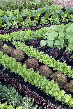 Growing Vegetables 11 plant combos you should grow side-by-sidee - Companion Planting - Companion planting just may help your garden grow. Potager Garden, Veg Garden, Garden Cottage, Garden Plants, Edible Garden, Permaculture Garden, Garden Pavers, Garden Site, Backyard Cottage