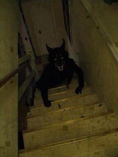 This is why I check the stairs every time I pass them