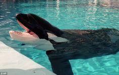 #whales #sealife #mammals