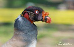 Atrapados por la imagen: En Parque Las Heras: Observación de aves y present...