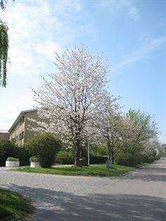 Teglgårdsvej 301, 1. mf., 3050 Humlebæk - Indbydende, ideel studielejlighed/begynderbolig eller til enlig