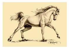 Horse Drawings and Sketches | Arabian horse drawing for the Exmoor White Horse Inn