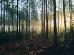 photography of tall trees at daytime photo – Free Forest Image on Unsplash Tree Lights Wallpaper, Lit Wallpaper, Adhesive Wallpaper, Rituals Cosmetics, Pin Maritime, Into The Wild, Forest Light, Sun Light, Photo On Wood