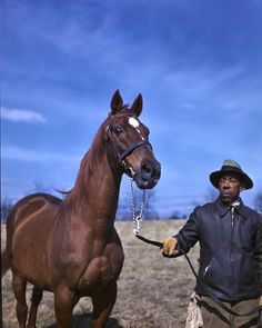 The Eighth Pole: Life and legacy of famed racehorse Man o' War Majestic Horse, Beautiful Horses, Kentucky Horse Park, Kentucky Derby, Horse Story, Horse Wallpaper, Man Of War, Sport Of Kings, Thoroughbred Horse