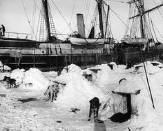 The ship 'Endurance' frozen in by ice during the 1914 - 1916 expedition to the Antarctic led by Shackleton. Crew members desperately tried to clear the ice with pick axes but the ship eventually froze in and was broken up. Pictured in front of the ship are the sled dogs outside their iced kennels.