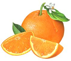 One whole orange with an orange leaf and flower coming out of the stem and two orange segments.