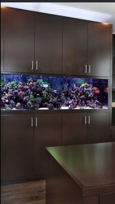 Great fish tank