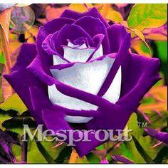Tempo Limite! 100 Particelle una Grande Collezione di Tutti I Tipi di Rosa Rare Semi di Fiori Perenni 14 varietà di Rose ME #007