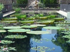 Waterlilies -- San Angelo San Angelo, Water Lilies, Golf Courses, Texas, College, Spaces, Travel, Collection, Amazons