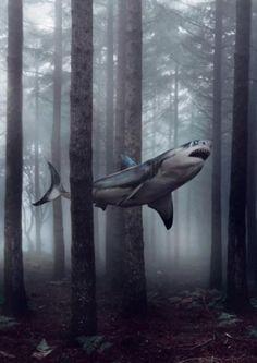 The ever elusive great backwoods shark