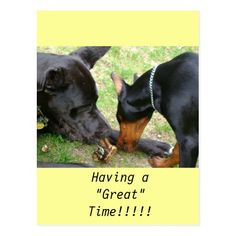 Great Dane and Doberman Post Card doberman facts, doberman art, blue doberman #dobermanlove #dobermanlover #dobermantimes, back to school, aesthetic wallpaper, y2k fashion