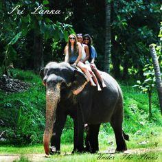 Sexy Women riding bareback barefoot on an Elephant in the Jungle/Sexy Frauen reiten ohne Sattel barfuß auf einem Elefant im Dschungel .