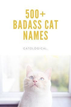 The perfect names for the felines that see themselves as the big cat on the block! #CatNames #CatIdeas #CatTips #CatNameList Grey Cat Names, Cute Cat Names, Grey Cats, White Cats, Badass Cat Names, Unique Cat Names, Kitten Care, Inspirational Celebrities, A Funny