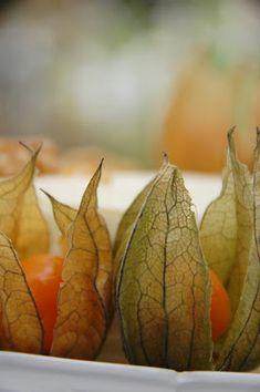 Makeaa murmelin täydeltä: Maailman paras porkkanakakku Pear, Fruit, Food, Hoods, Meals, Pears, Bulb