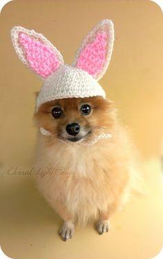 139 melhores imagens de bones mascaras pet   Dog accessories, Dog ... dac9890e3b