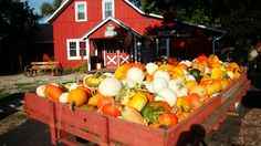 Enjoy #fall festivities and pick out a carve-worthy gourd at #Chicago's best pumpkin patches.