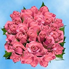 100 Fresh Cut Pink Roses for Valentine's Day   Kiko Roses   Fresh Flowers Express Delivery   The Perfect Valentine's Day Gift