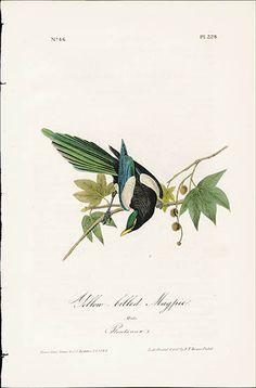 1840 Audubon Birds America First Edition Special Bargains