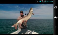Muskie Where did you catch it? Lake st.clair What did you catch it with? A musky mafia bucktails It is the September muskies Inc tournament winner