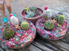 Bright and cheerful cactus and succulent dish garden