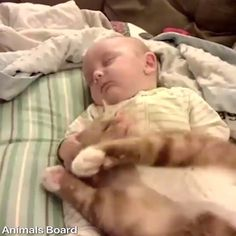 Cute cats and kittens lover, know and read here about your cute cats, cute kittens, newborn kittens, and cute baby cats. Cute Funny Animals, Cute Baby Animals, Funny Cats, Cute Dogs, Kitten Love, I Love Cats, Crazy Cats, Cute Cats And Kittens, Kittens Cutest