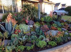Beautiful front yard rock garden landscaping ideas DIY Garden Yard Art When growing your own la Succulent Rock Garden, Succulent Landscaping, Succulent Gardening, Diy Garden, Landscaping With Rocks, Landscaping Tips, Cacti And Succulents, Front Yard Landscaping, Planting Succulents