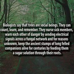"~ German forest ranger Peter Wohlleben says trees are social beings, interconnected thanks to a natural network. He wrote ""The Hidden Life of Trees"" The More You Know, Good To Know, Did You Know, The Words, Wtf Fun Facts, Random Facts, Random Stuff, Funny Facts, Funny Gifs"