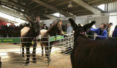 La Feria de San Vitero no volverá a contar con la subasta de burros imagen 3