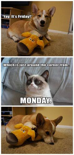 #GrumpyCat #meme For more Grumpy Cat stuff, gifts, and meme visit www.pinterest.com/erikakaisersot Grumpy Cat Quotes, Grumpy Cat Humor, Cat Memes, Funny Memes, Grumpy Kitty, Grump Cat, Humour, El Humor, Funny Animal Pictures