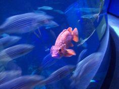 Quebec aquarium.