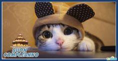 cartoline-compleanno-con-gatti-1