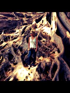 Love tree roots in Balboa park!